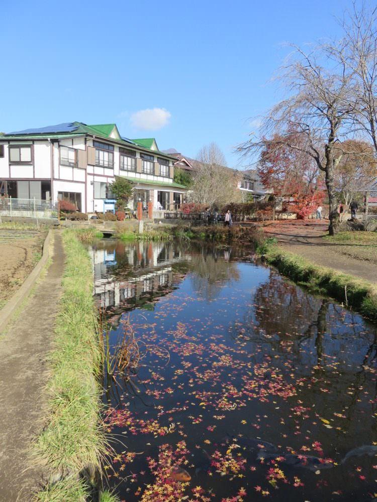 《日本》富士五湖 忍野八海 Oshino Hakkai Springs 泉水傳說