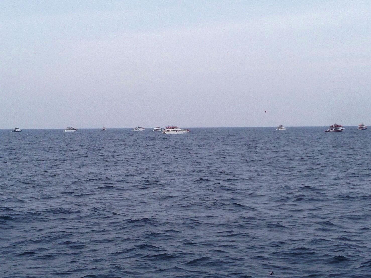 《日本》沖繩冬天玩蝦密?激推冬天限定超值賞鯨船