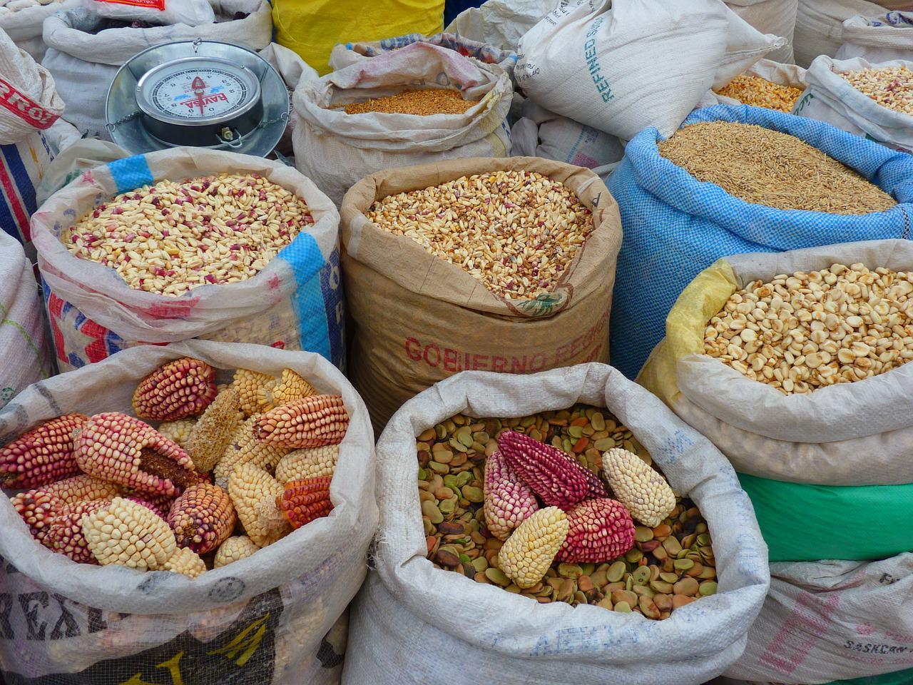 專欄|秘魯十大特色美食天竺鼠羊駝紫玉米醃生魚國菜通吃