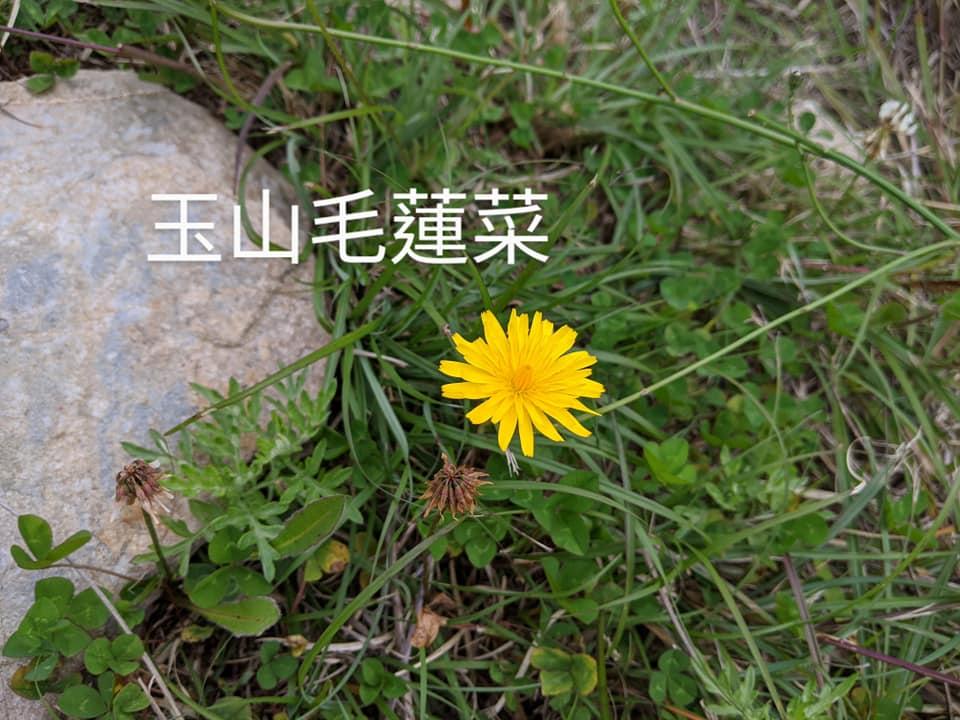 合歡山玉山雪山高山花卉對照