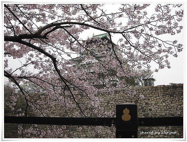 賞花遊日本 Day3- 西之丸庭園+歷史博物館 領你更認識大阪
